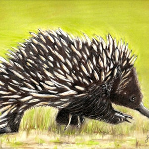 (CreativeWork) Echidna by Gabriele Phillis. other-media. Shop online at Bluethumb.