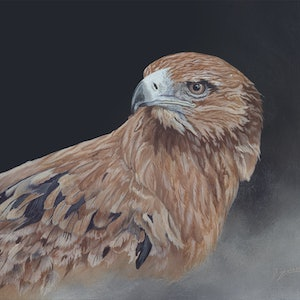 (CreativeWork) Red Kite by Dario Zanesco. #<Filter:0x00007f7bb0a9ad98>. Shop online at Bluethumb.