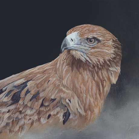 (CreativeWork) Red Kite by Dario Zanesco. Acrylic Paint. Shop online at Bluethumb.