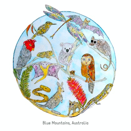 (CreativeWork) Sacred Species - Blue Mountains by Mishy Rowan. watercolour. Shop online at Bluethumb.