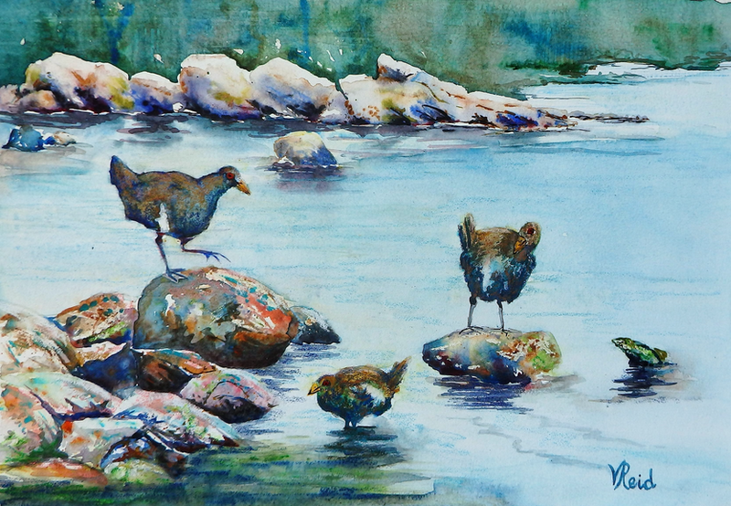 (CreativeWork) Trio of Turbos by Vicki Reid. watercolour. Shop online at Bluethumb.
