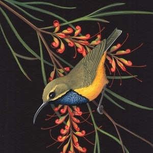 (CreativeWork) Sunbird  by Lyn Cooke. watercolour. Shop online at Bluethumb.