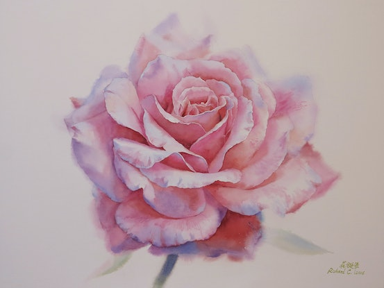 (CreativeWork) Pink Rose Ed. 1 of 30 by Richard(Tiejun) Chao. Print. Shop online at Bluethumb.