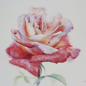 (CreativeWork) Two Tone Rose by Richard(Tiejun) Chao. watercolour. Shop online at Bluethumb.