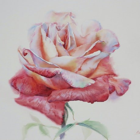 (CreativeWork) Two Tone Rose by Richard(Tiejun) Chao. Watercolour Paint. Shop online at Bluethumb.
