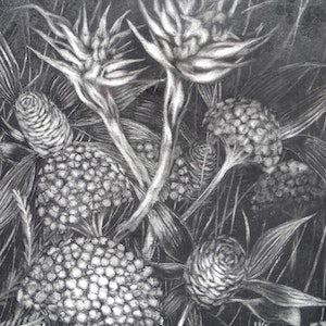 (CreativeWork) 'Drawn from Nature 1' by Jennifer O'Young. drawing. Shop online at Bluethumb.
