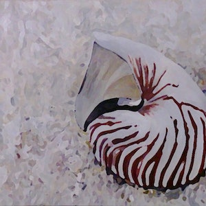 (CreativeWork) Nautilus overboard.1 by Carmen Griffen. arcylic-painting. Shop online at Bluethumb.
