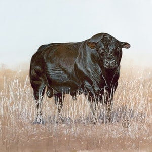 (CreativeWork) American Angus Bull by Katrina Goldsworthy. arcylic-painting. Shop online at Bluethumb.
