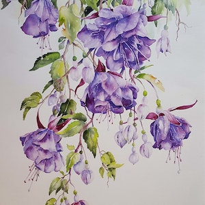 (CreativeWork) Fuchsia Flutter by Helen Miles. watercolour. Shop online at Bluethumb.