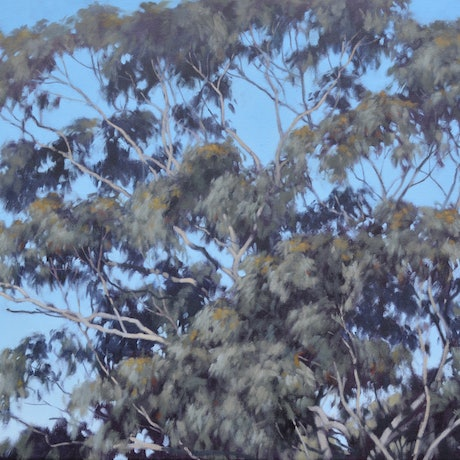 (CreativeWork) Stokers Siding Treetop by Stephen Travers. Oil Paint. Shop online at Bluethumb.