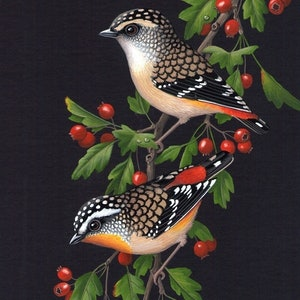 (CreativeWork) Pardalotes  & Hawthorn by Lyn Cooke. watercolour. Shop online at Bluethumb.