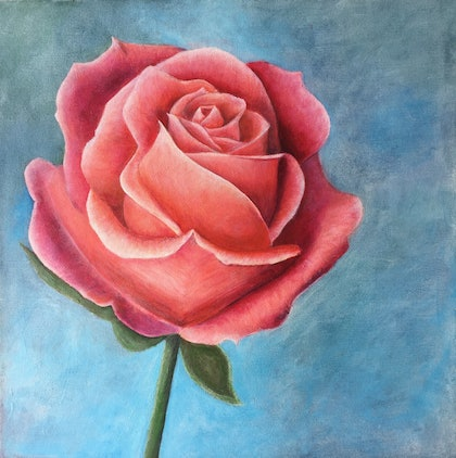 (CreativeWork) Soft Rose by Abby Smith. arcylic-painting. Shop online at Bluethumb.