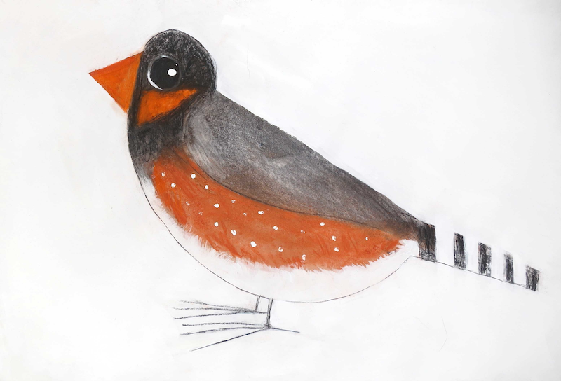 (CreativeWork) Zebra Finch  by John Graham. mixed-media. Shop online at Bluethumb.